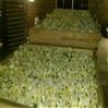 热泵菊花烘干机厂家帮您解决菊花干燥难题