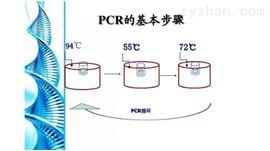 大豆PCR检测试剂盒