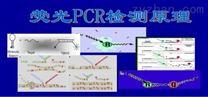 猪弓形虫PCR检测试剂盒说明书