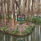 林业区森林防灾负氧离子检测远程发布系统