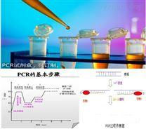檀香染料法PCR鑒定試劑盒廠家