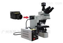 顯微鏡LED熒光光源